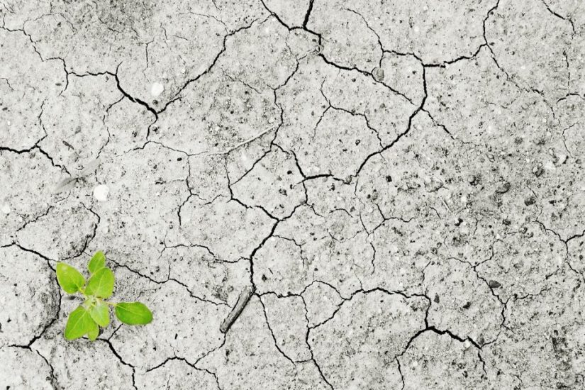 Combating climate change – Why startups are a solution